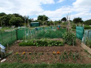 Langton Matravers allotments
